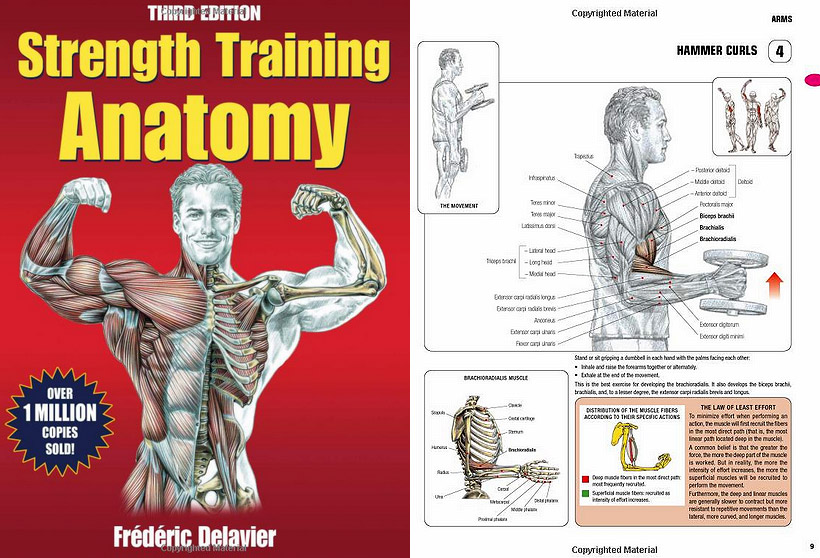 Book Review: Strength Training Anatomy 3rd Edition /// H3 Daily